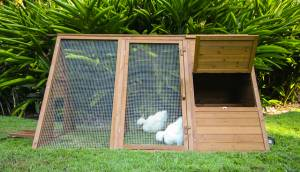 cluck house coop for chickens