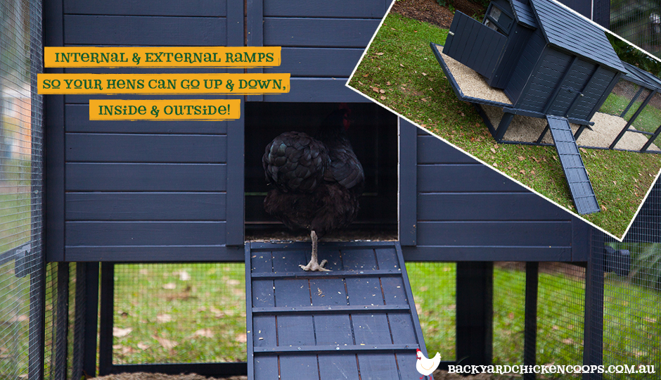 The Penthouse chicken coop comes with both internal and external ramps, leading outside the coop and into the run