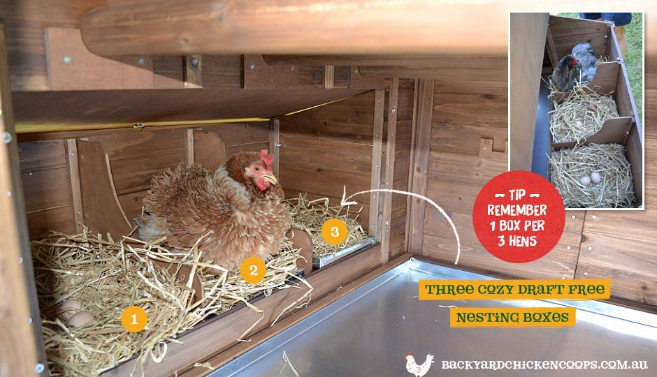 The Penthouse chicken coop comes with three nesting boxes