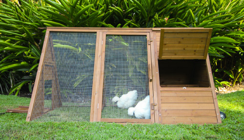 Backyard Chicken Coops Australias Finest Chicken Houses - Backyard poultry information centre australia