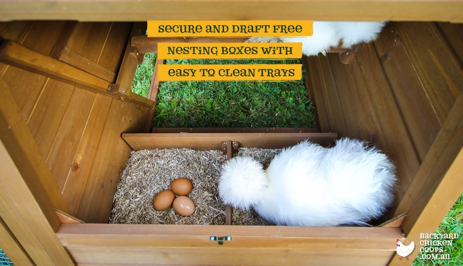 Two bantam chickens sitting in the nesting boxes of the Cluck House chicken coop.
