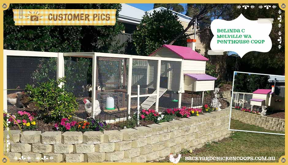 customer-pics-garden-paradise-extension-with-penthouse-chicken-coop
