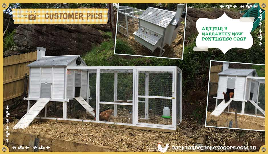 customer-pics-pure-white-penthouse-chicken-coop
