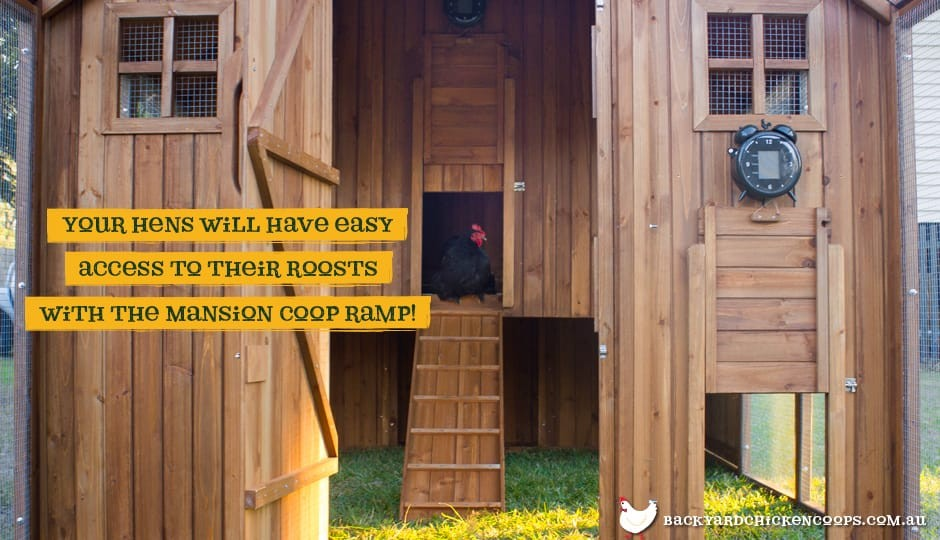 The Mansion Chicken Coop interior view with ramp with text: your hens will have easy access to their roosts with the Mansion Coop ramp.
