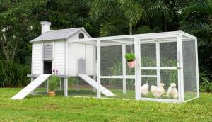 outdoor penthouse chicken coop in white