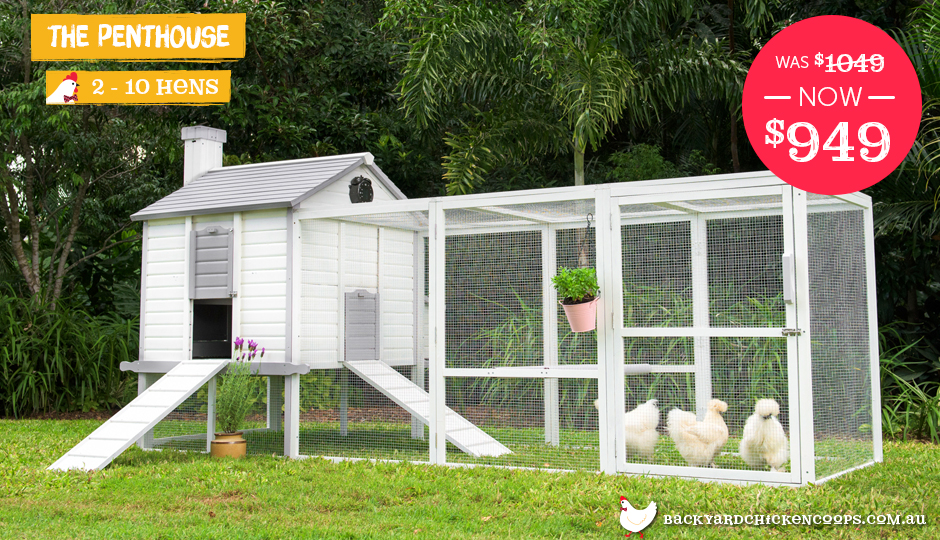 outdoor penthouse chicken coop