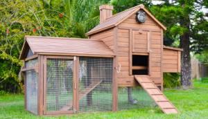 taj mahal outdoor chicken coop