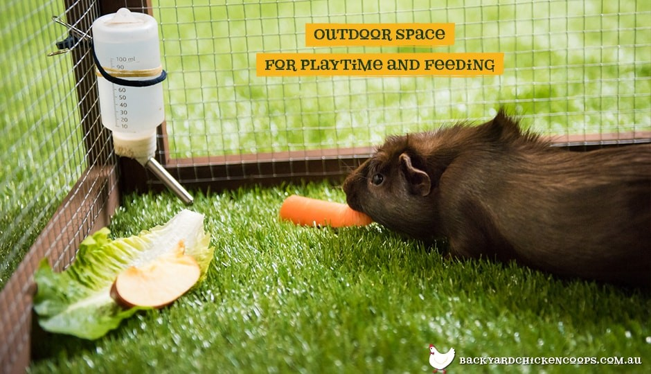 Interior of the Piggy Parlour guinea pig enclosure's secure outdoor play area