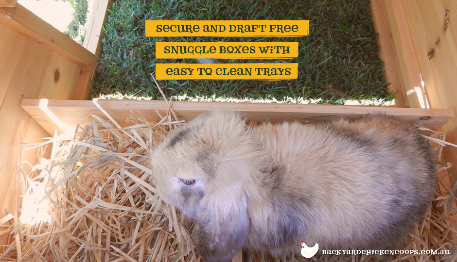 Rabbit in Hoppy Hotel bunny enclosure snuggle box