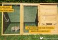 Rabbit in secure run of hoppy hotel bunny enclosure