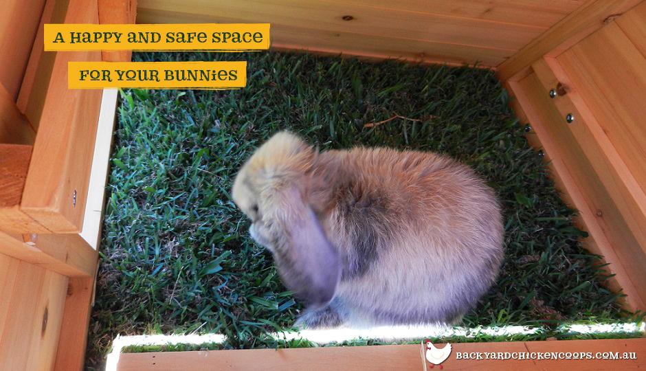 Rabbit in the Hoppy Hotel bunny enclosure hutch area