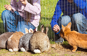 Rabbits in rabbit den bunny enclosure run