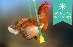 chicken swing accessory thumbnail