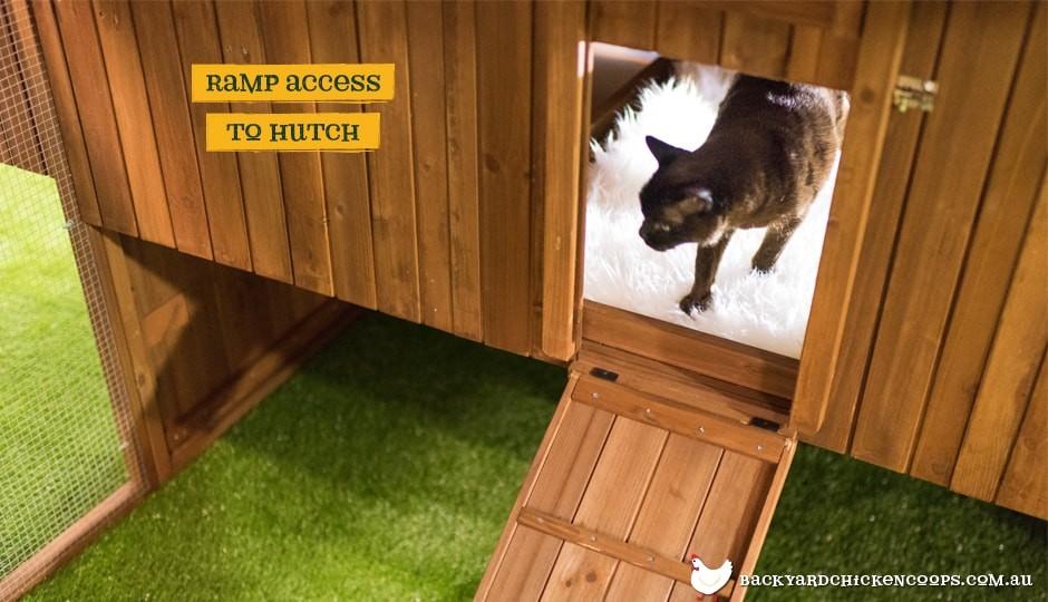 Outdoor cat runs for indoor cats