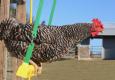 chicken-swing-2