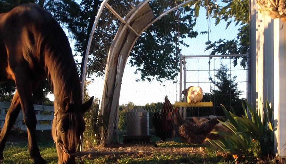 chicken-swing-4