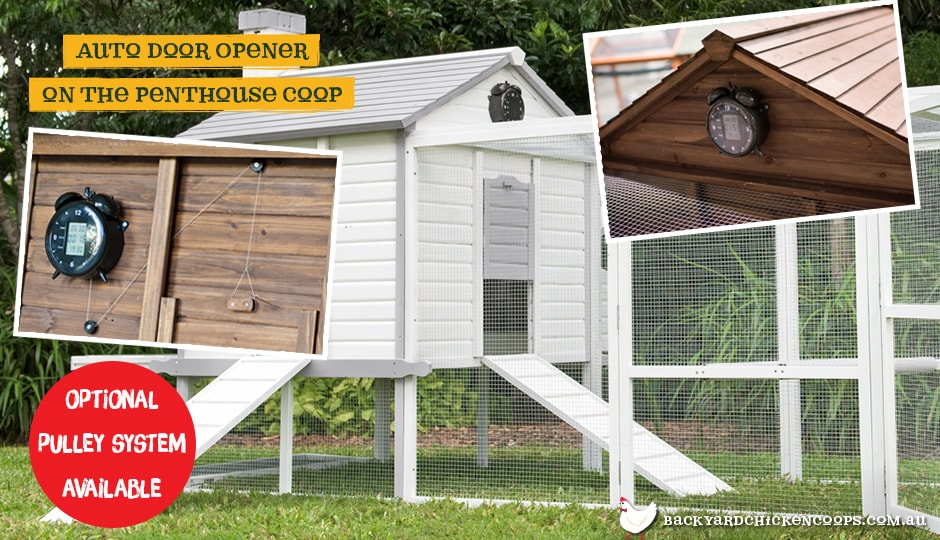 The Automatic Chicken Coop Door Opener installed in Penthouse coop