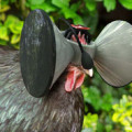 virtual reality chicken