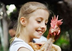 child with adopted battery hen