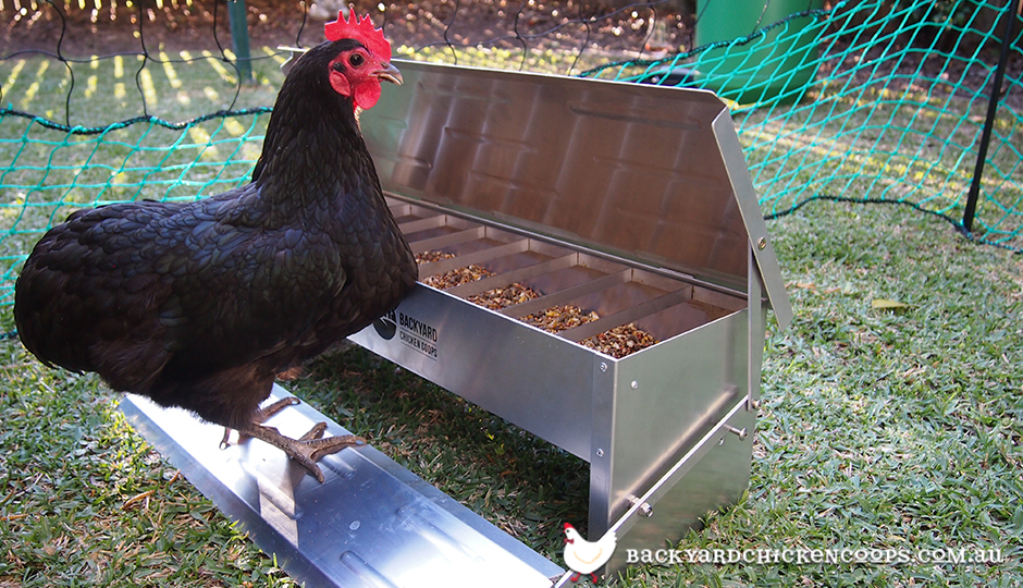 bantam using free range treadle chicken feeder