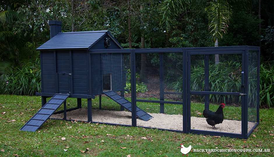 Penthouse chicken coop and run