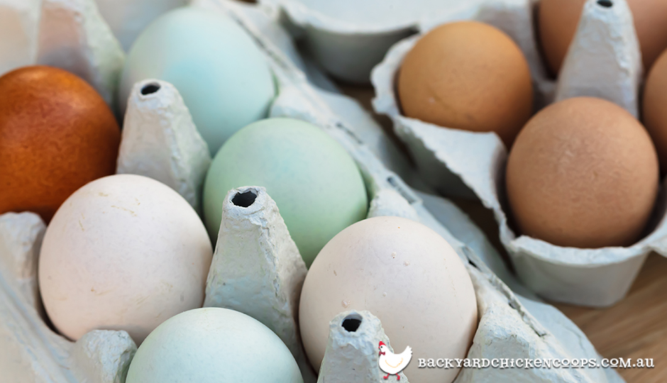 Different Coloured Eggs And The Breeds That Lay Them