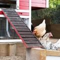 Chickens in red taj mahal backyard coop