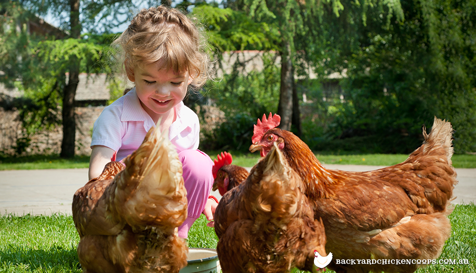 Young girl patting her backyard chickens