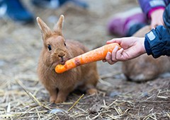 Rabbits really do love carrots, but there are plenty of other options for them to eat