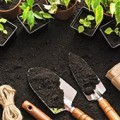 backyard gardening is a big part of living a more sustainable lifestyle