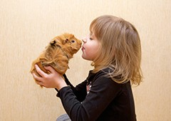 Kids will love interacting with their new guinea pig friend