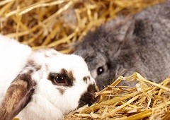 Rabbits are absolutely adorable and easy to take care of too