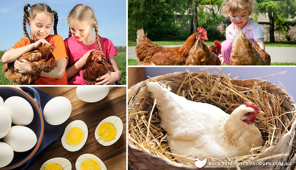 owning-chickens-for-pets-or-eggs