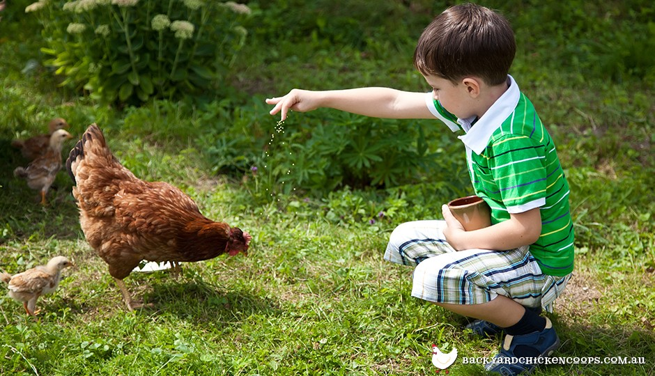 Young boy feeding brown chicken in backyard