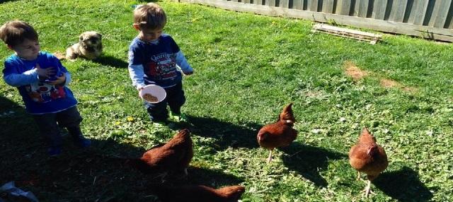 kate-children-chickens