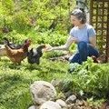 lady-in-garden-with-chickens