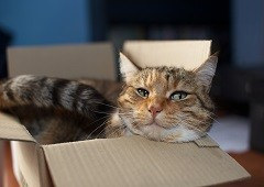 Cat in cardboard box