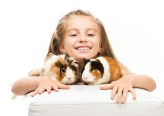 Two guinea pigs and a girl