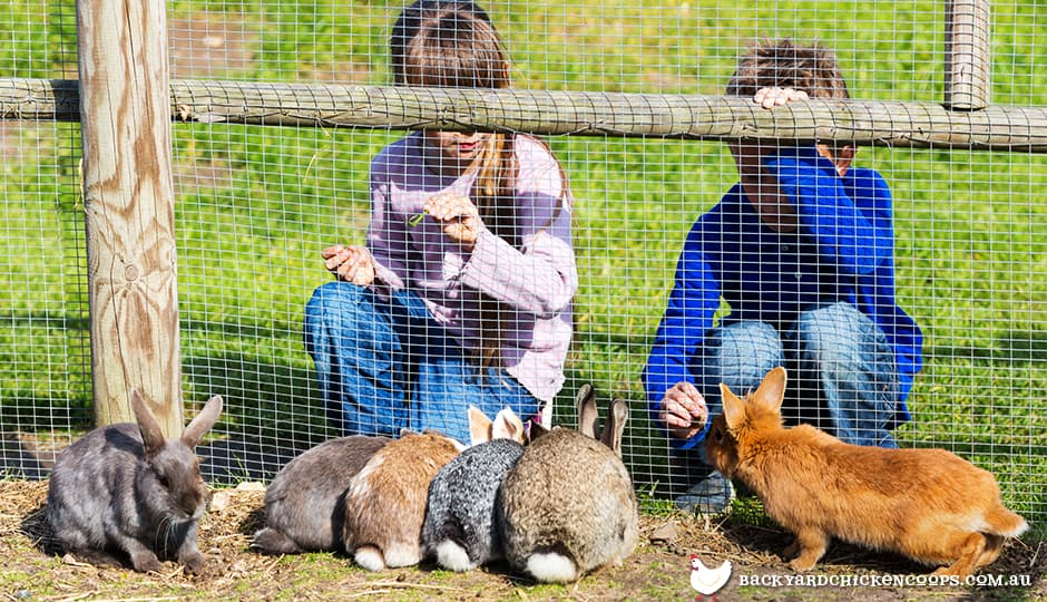 Rabbit Proof Fence For Pet Rabbits