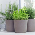herb are healthy and fragrant