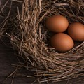 dark-brown-eggs-in-nest