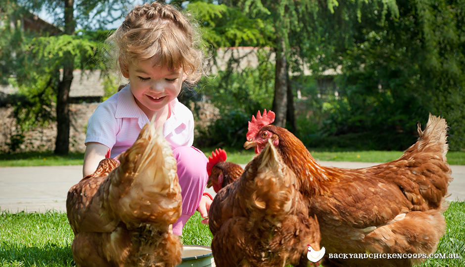 Young girl with chicken flock in backyard