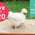 hemp bedding for chickens