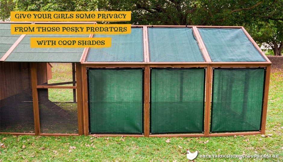 Mansion backyard chicken coop with shade mesh attached