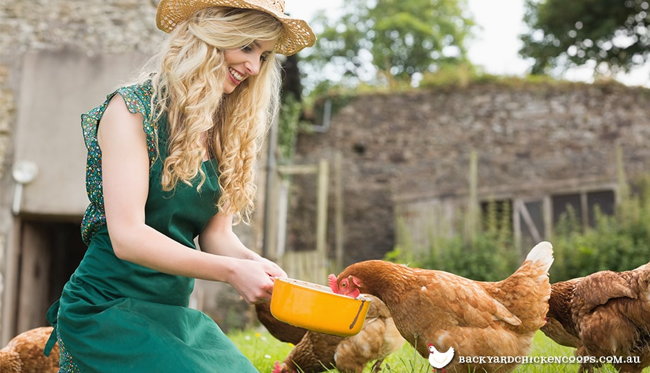 Young woman feeding chickens