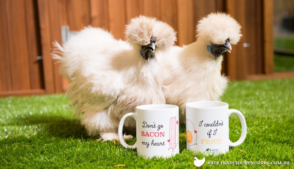 Silkie chickens with Chicken Lover Mug