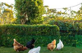 poultry fencing customer image