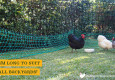 Poultry fencing for backyard chickens 24m length