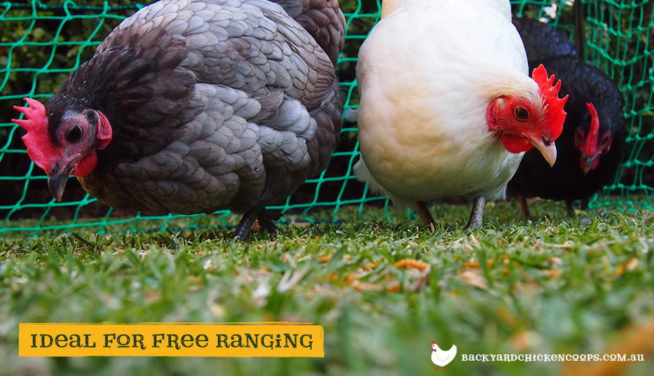 Poultry fencing for backyard chickens ideal for free ranging