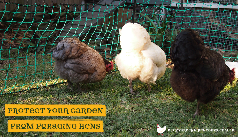 Poultry fencing for backyard chickens protect your garden